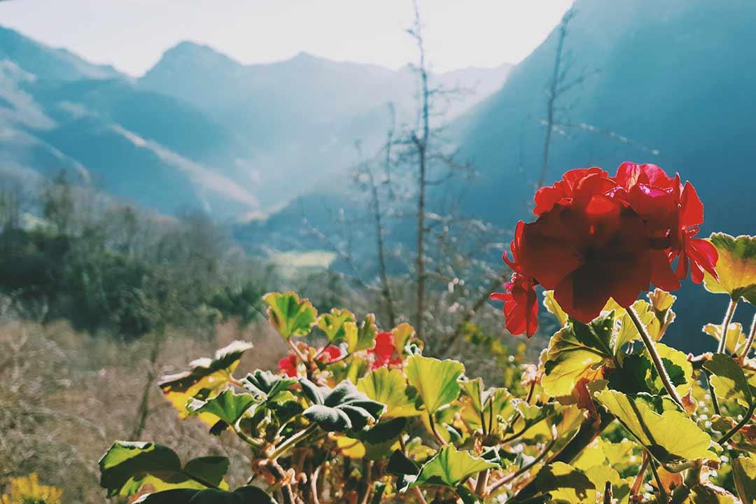 Casa Rural en Asturias y los Picos de Europa. Rincón del Sol