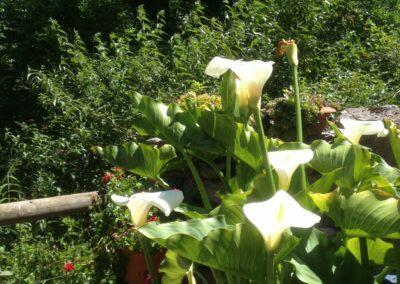 Aguas del Beyo jardin flores